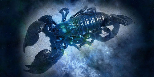 гороскоп на 2019 год для раков