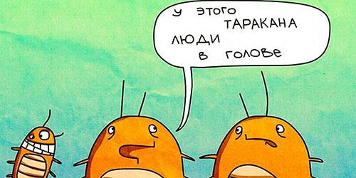 приснились большие тараканы