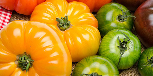 разноцветные помидоры