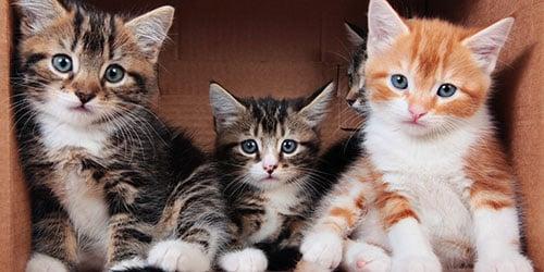 маленькие котята в коробке