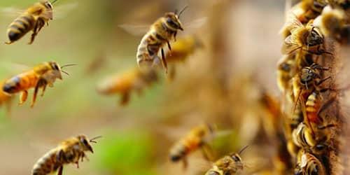 Убегать от пчел во сне