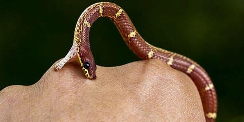 К чему снится что змея укусила за руку?