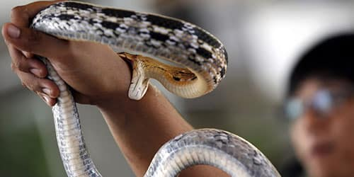 Мужчину за руку кусает змея